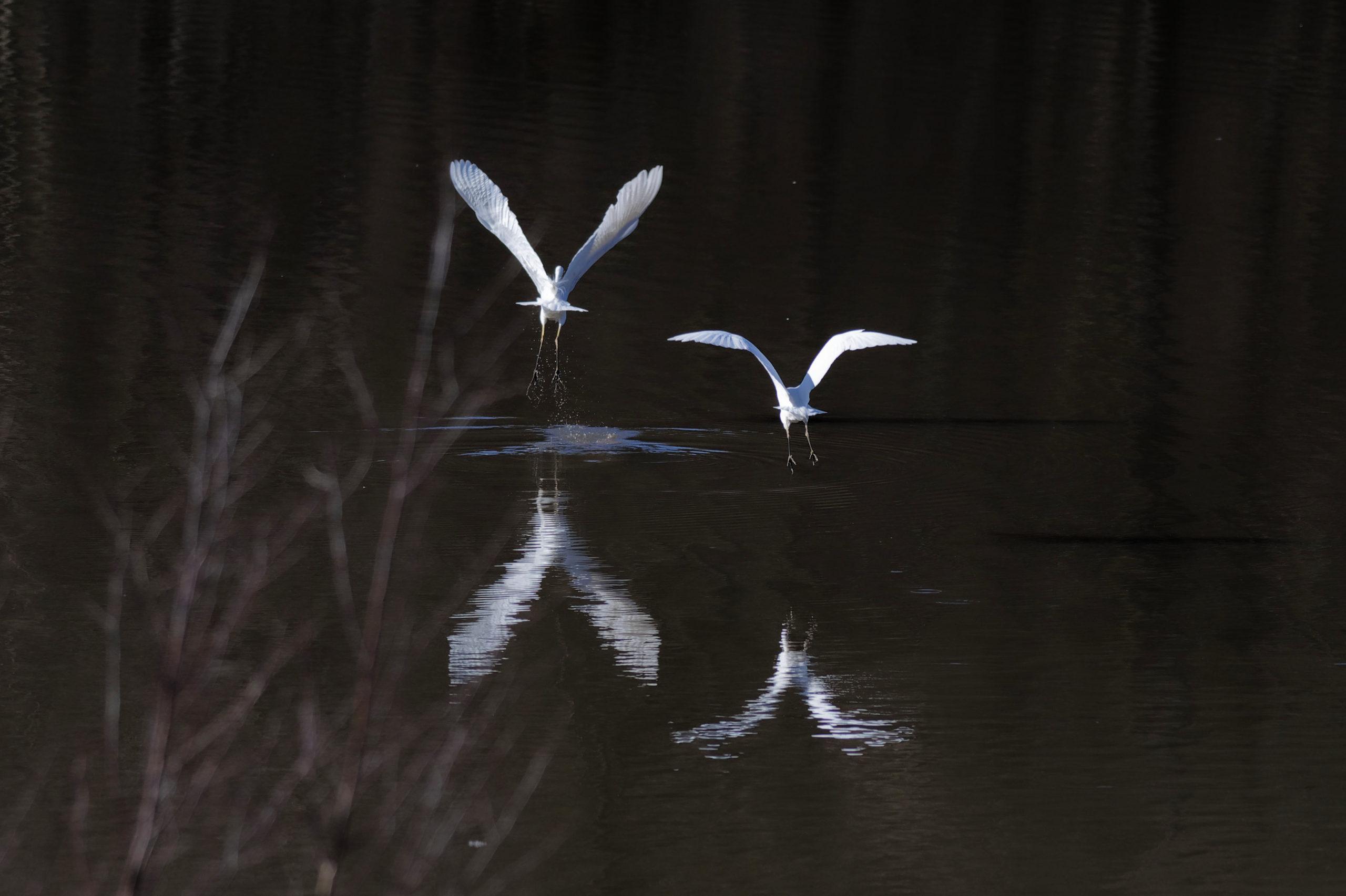 natures ViVes : en l'air-dans l'eau
